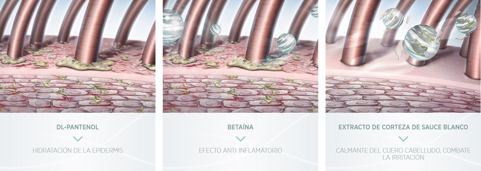 Efecto-Balance-System-Professional